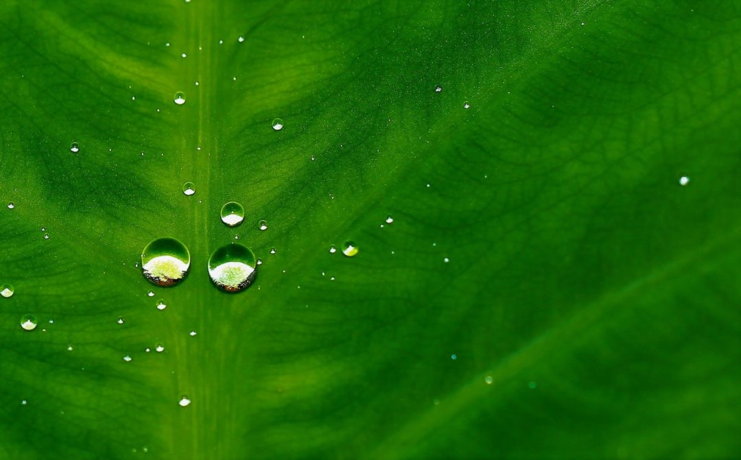 Water Droplet on the Leaf - Short Poem