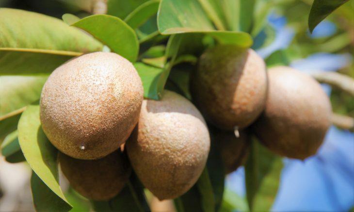 Chikoo or Sapodila Fruit - A Short Poem