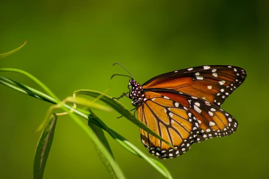 Butterfly - A Short Poem