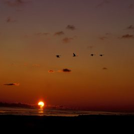 Sunset and birds image - poemtheart.com