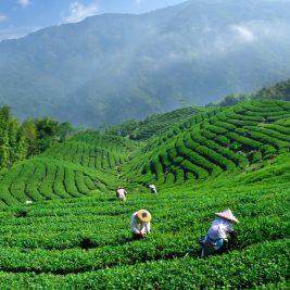 Tea Garden - poemtheart.com