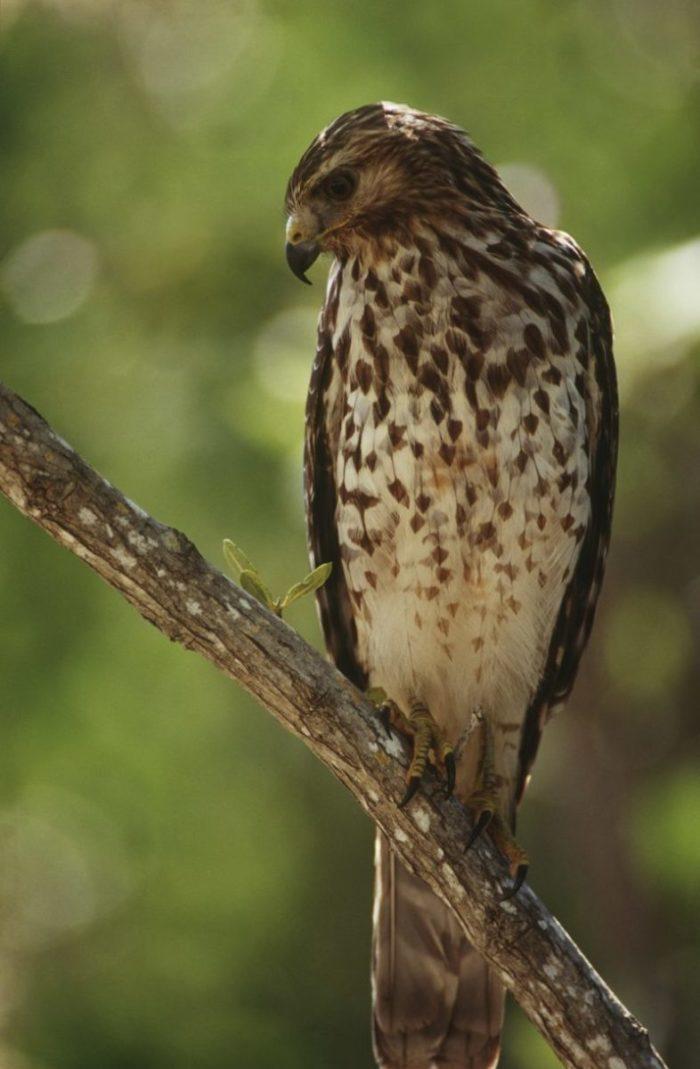 Desert Falcon - Poemtheart.com