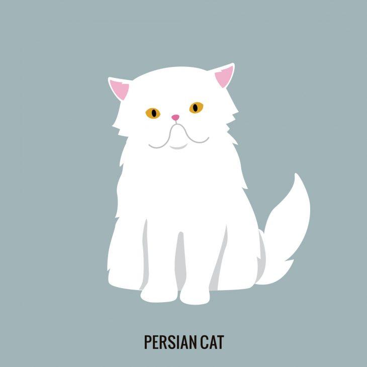 Persian Cat Pet