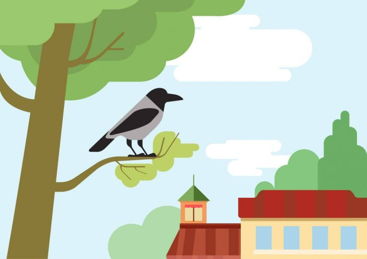 House Crows
