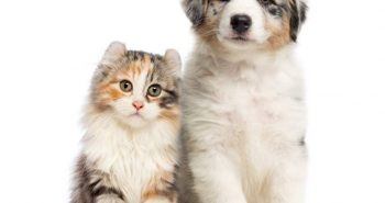 Poem on Cat and Dog